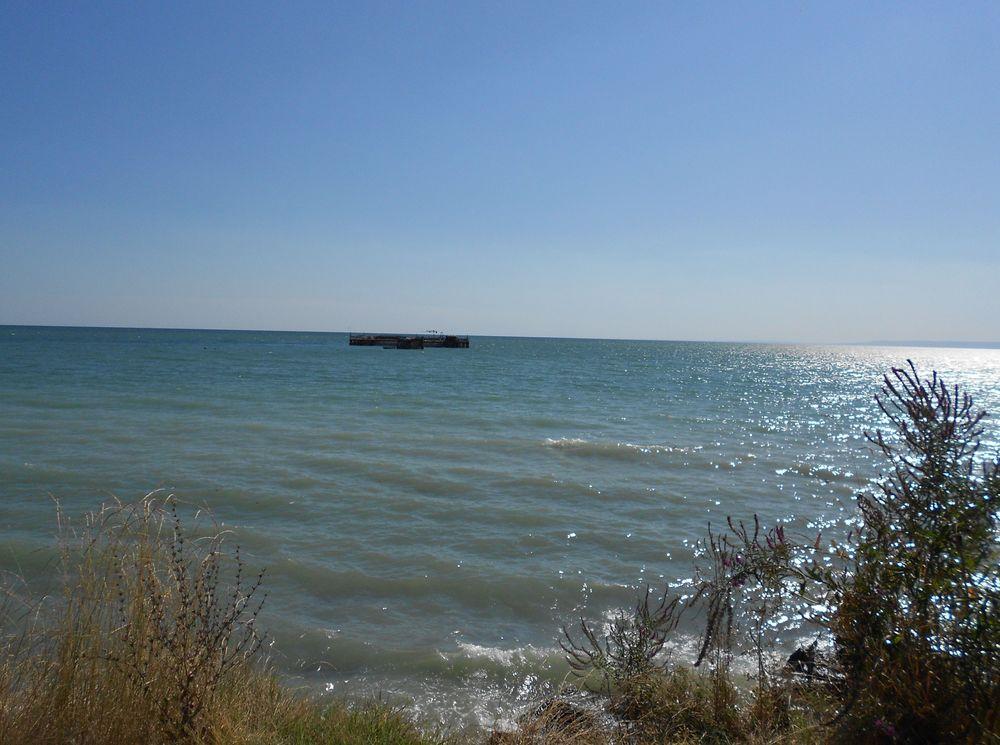 Dalboka Mussels Farm