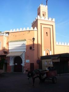 donkey in Djemaa el Fna