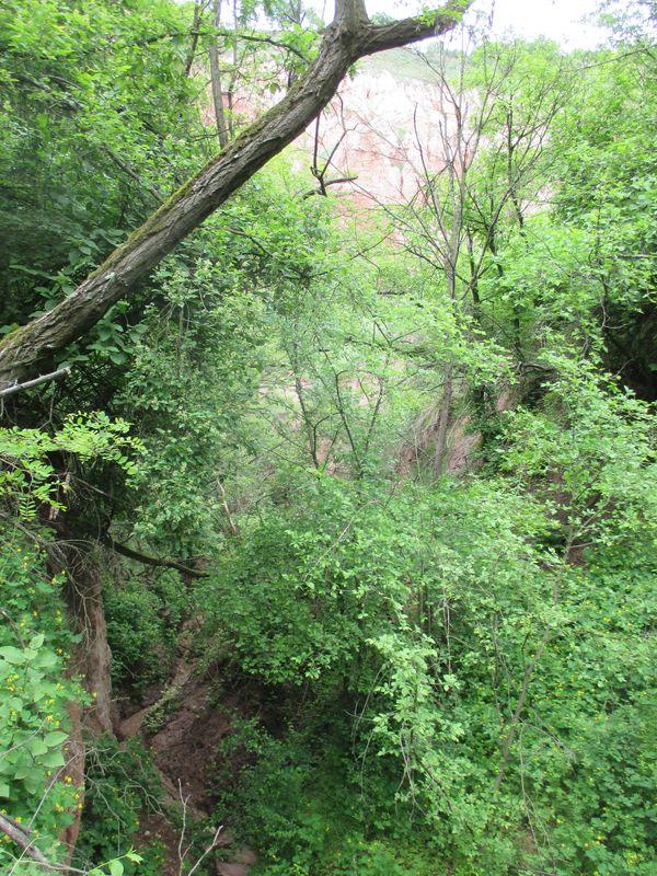 Red ravine forest